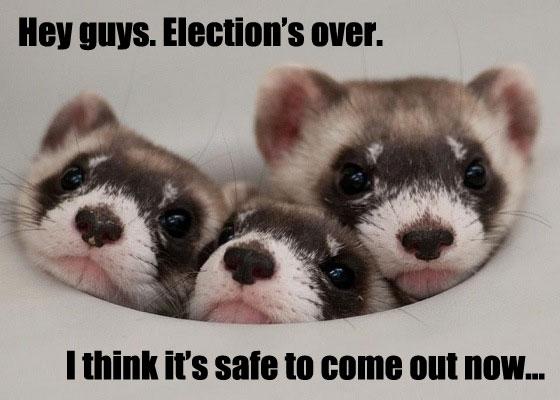 OakMonster.com - Safe Ferrets